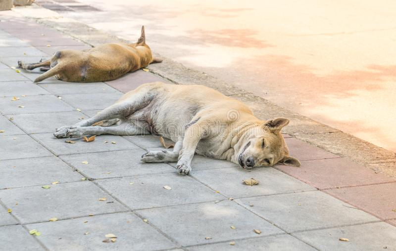 Lonely homeless dog sleeping on the sidewalk. Stray dogs sleep on the floor. lonely concept. alone concept. animal concept. family concept stock photography