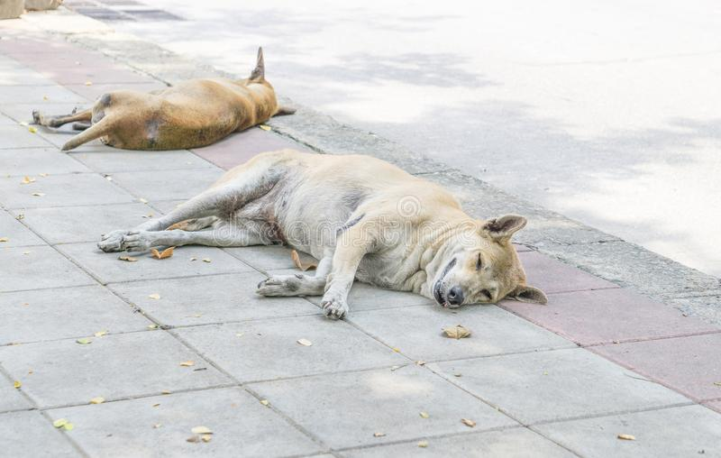 Lonely homeless dog sleeping on the sidewalk. Stray dogs sleep on the floor. lonely concept. alone concept. animal concept. family concept stock photo