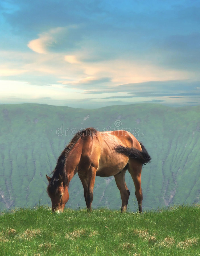 Free Lonely Horse Stock Photo - 4248450
