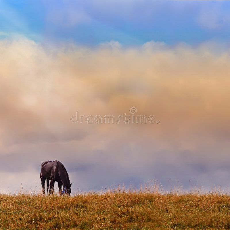 Free Lonely Horse On A Log Stock Images - 7608484