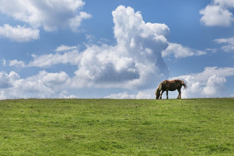 A lonely horse stands on the grassland under the sky. A lonely horse stands on the grassland under the sky, Carpathians, Transylvania, Romania stock images