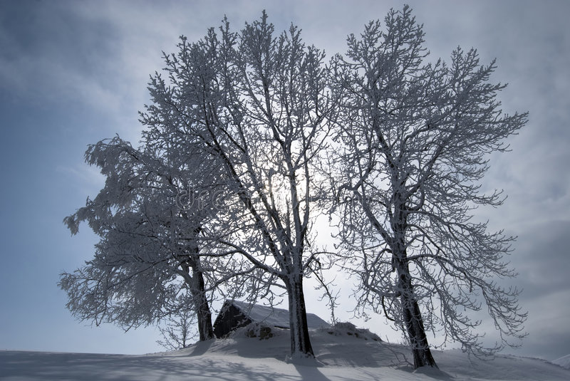 Lonely house. Winter landscape;Lonley house ad tree in a village in the mountains,in Romania royalty free stock images