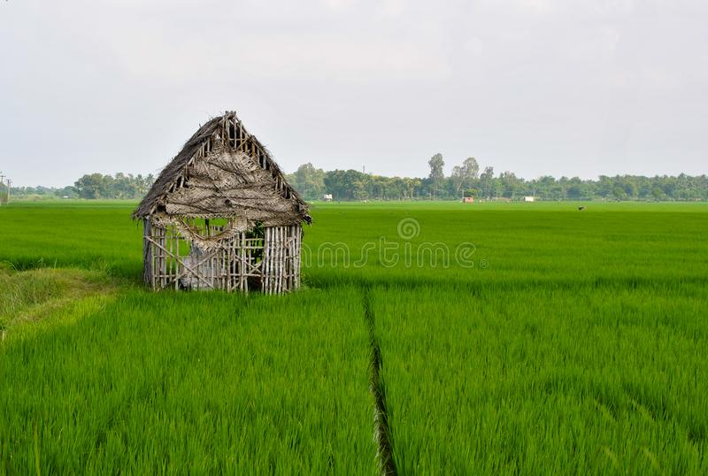 A lonely hut in an agricultural land stock photography