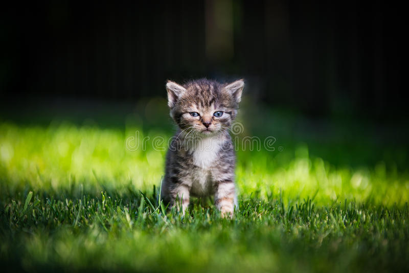 Lonely kitty stock image