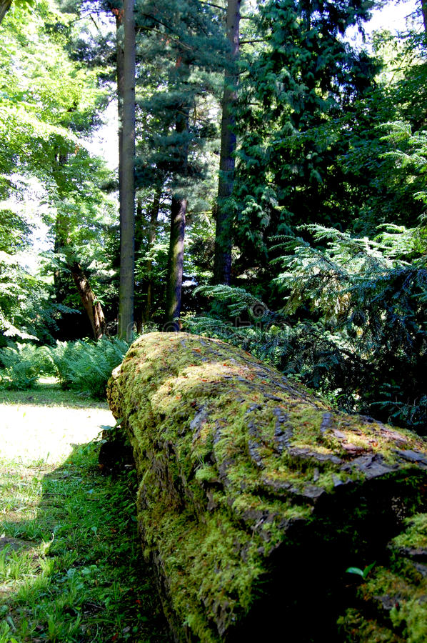 Lonely, knocked down trunk covered with moss stock images