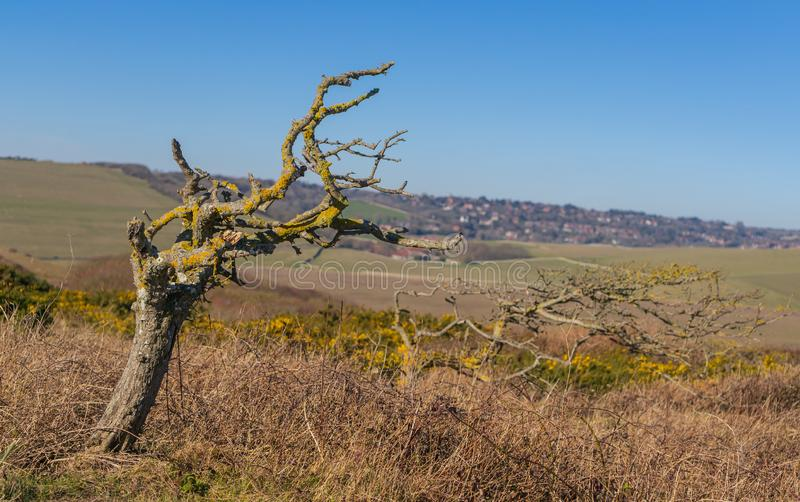 Lonely leafless tree in the background of the fields and small village.  stock photo