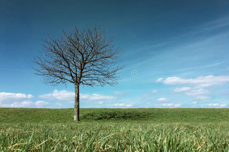 Lonely leafless tree standing on a green meadow hill royalty free stock images