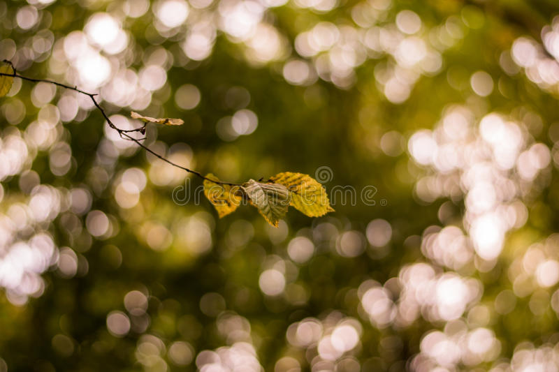 Lonely leaves stock image