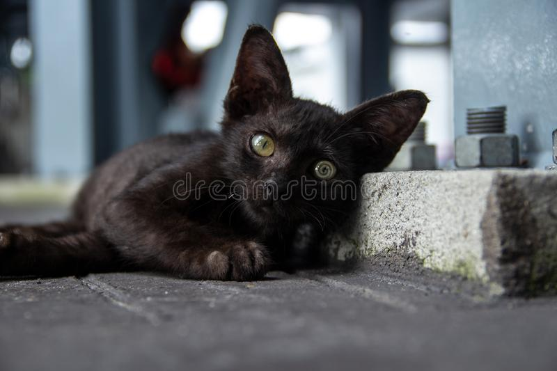 Lonely little cute cat staring at you stock image