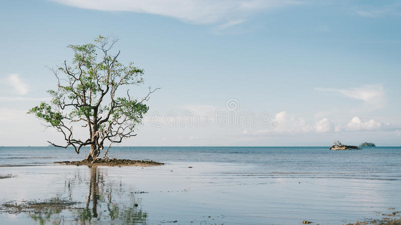 A lonely man royalty free stock images