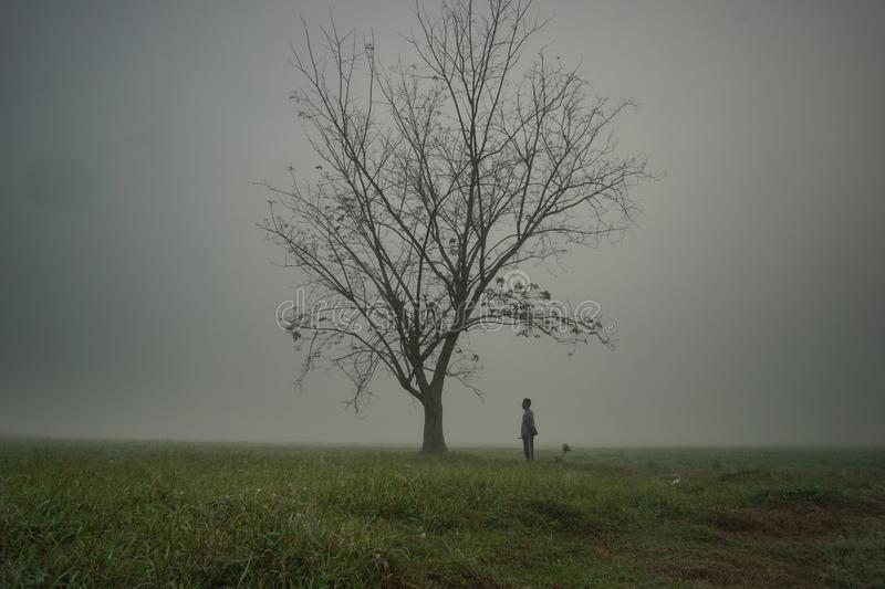 Lonely man near a lonely tree at the paddy field in rural area near kelantan shot with camera fine art royalty free stock photography