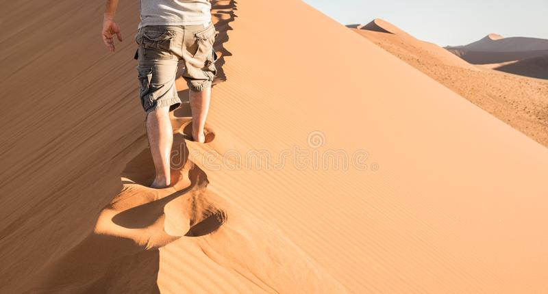 Lonely man walking on sand crest at Dune 45 in Sossusvlei desert. Wanderlust concept in namibian famous place - Adventure trip travel to african wonder in royalty free stock photography