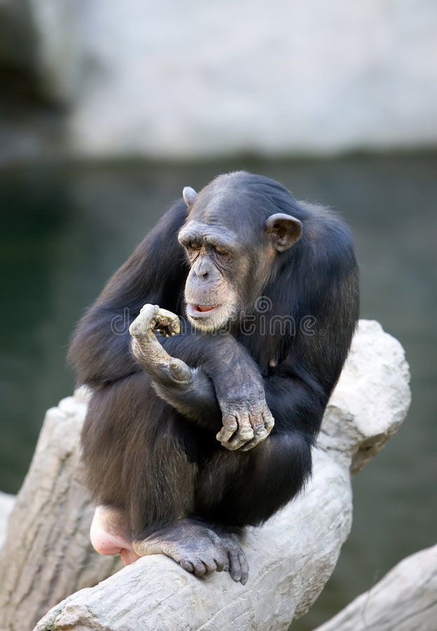 Lonely monkey sitting on top of a large tree trunk stock photo