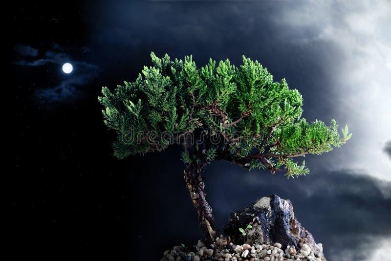 Lonely night tree