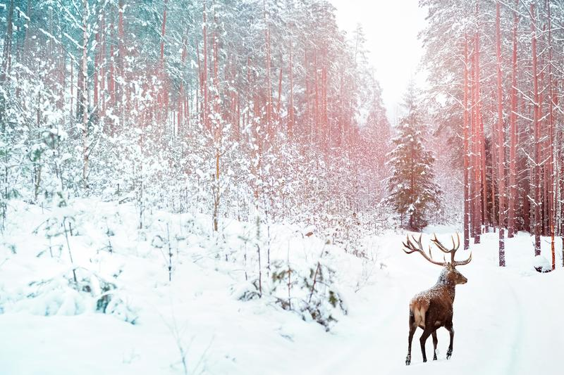 Lonely noble deer against winter fairy forest. Winter Christmas holiday image. Image toned in pink and blue color stock image