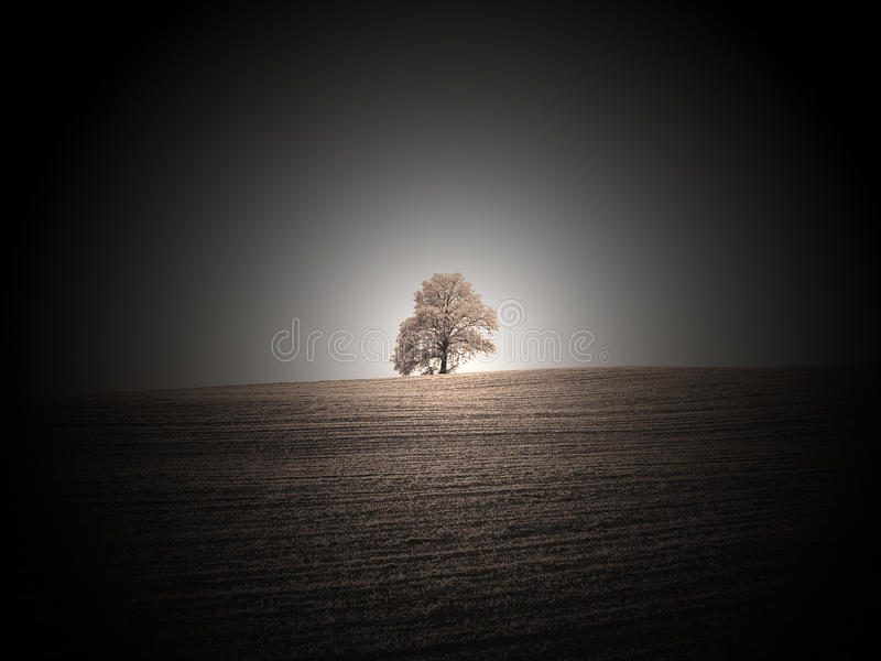 Lonely oak royalty free stock photos