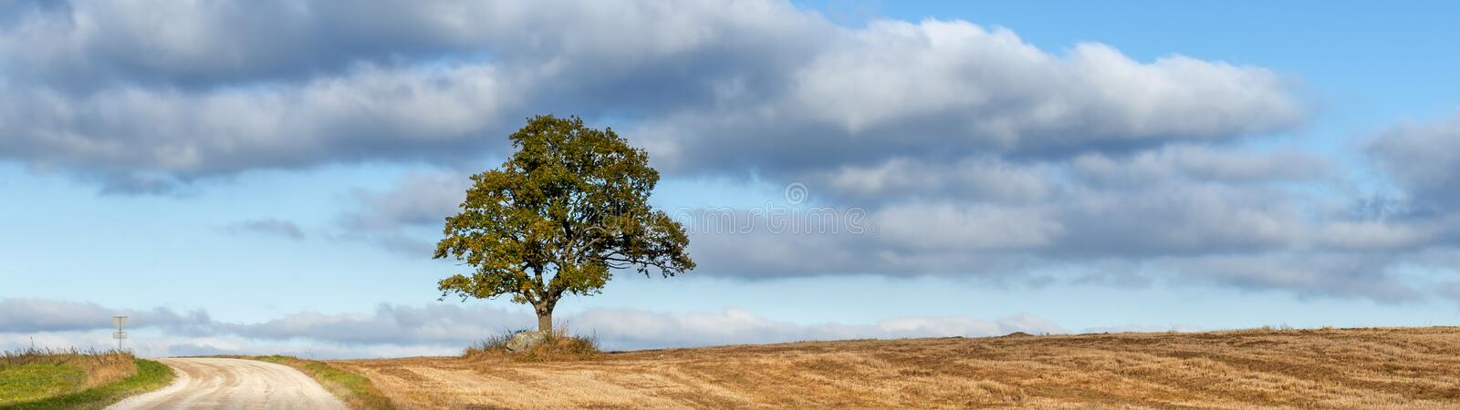 Lonely oak tree in autumn royalty free stock photography