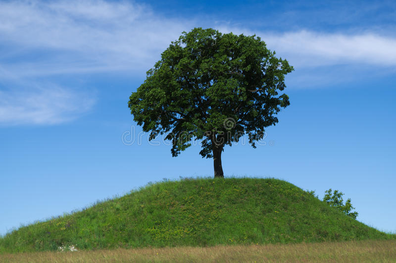 Lonely oak tree on the top of a hill royalty free stock photo