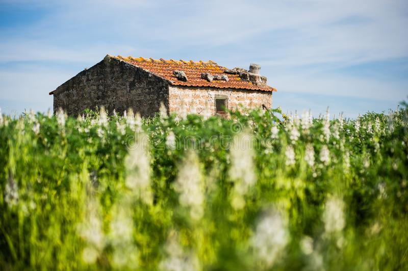Lonely old house in the middle of field royalty free stock photography