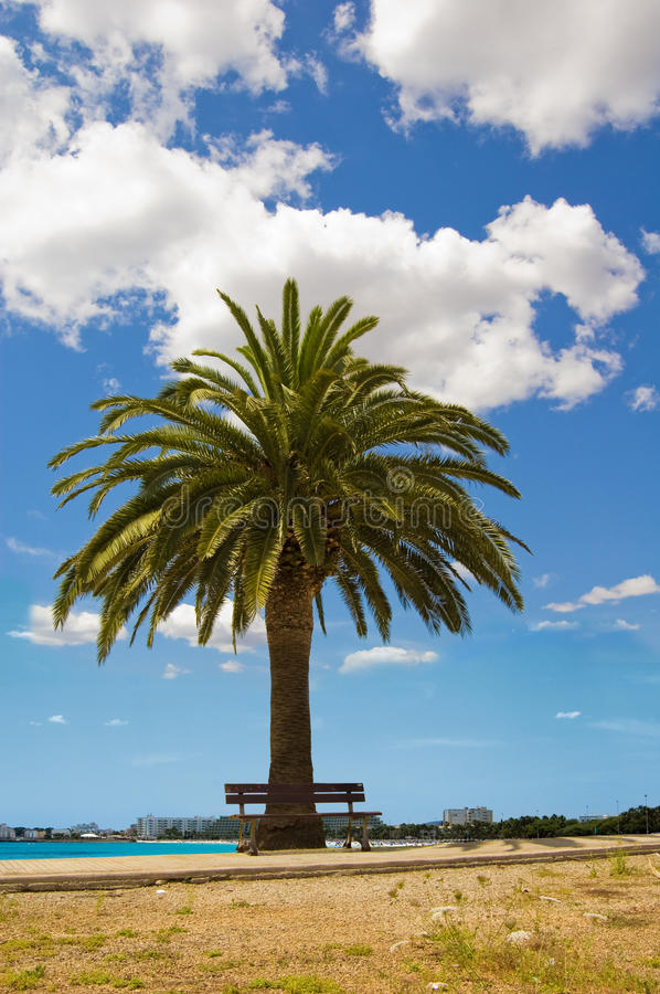 Download Lonely palm stock image. Image of summer, botanic, tropical - 10952223