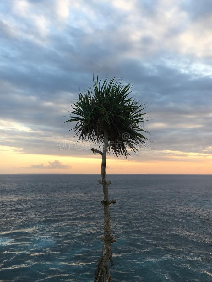 Lonely palm grows with a view royalty free stock photo