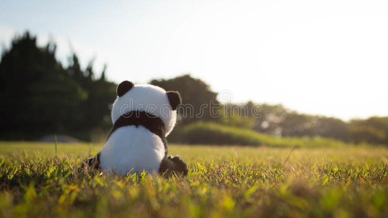 A lonely stuffed toy panda sitting on green grass in the field during sunset. Lonely Panda sitting on the field stock photos