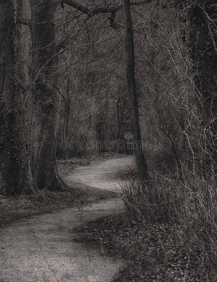 The lonely park way. In black and white royalty free stock photos