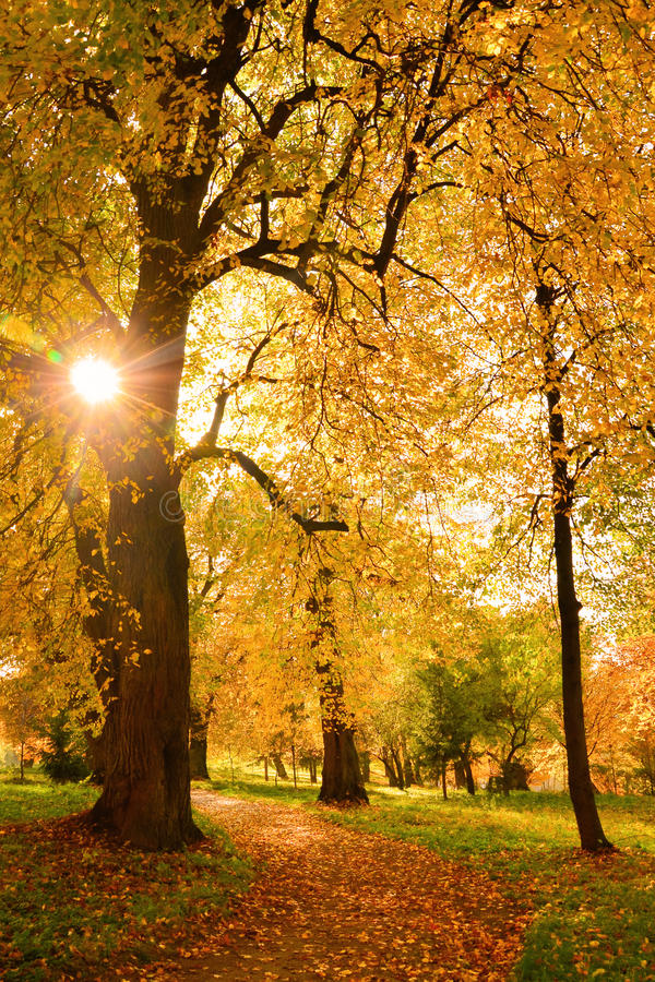 Download Lonely Path In The Fall Park Stock Image - Image: 27577345