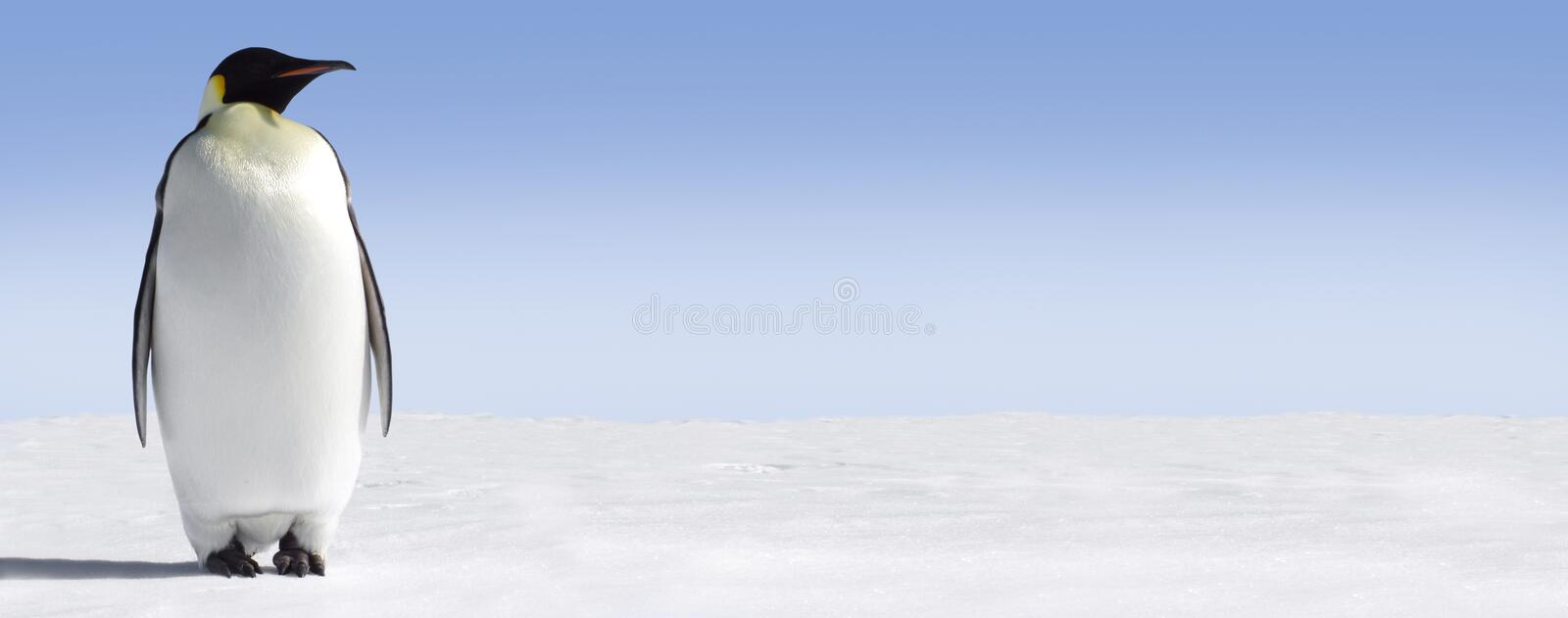 Lonely Penguin. A lonely penguin on a panoramic icy landscape