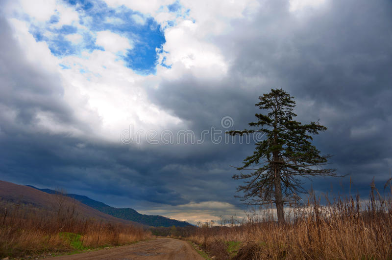Download Lonely pine stock photo. Image of music, farm, land, middle - 25043618