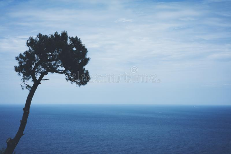 Lonely pine tree on background sea scape, waves of blue quiet ocean coast landscape. Panorama horizon perspective view nature hili royalty free stock photos