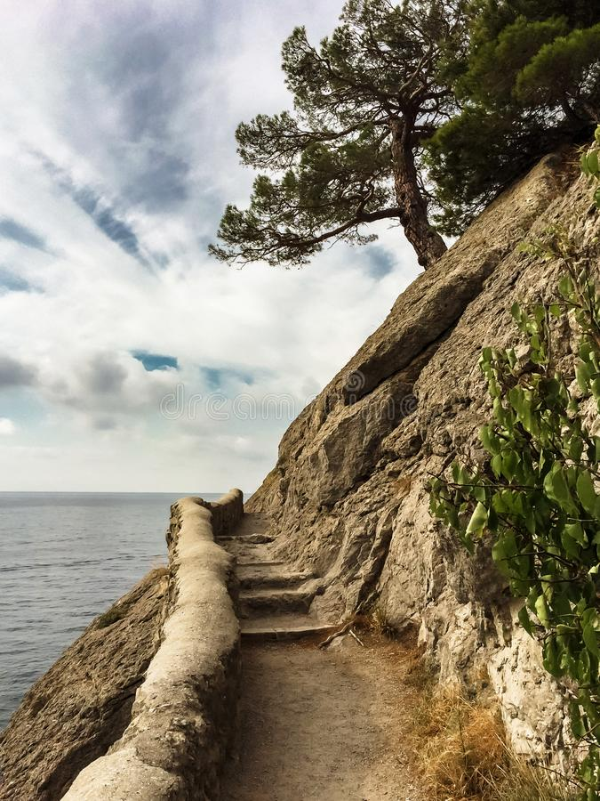 Lonely pine tree on the edge of steep cliff with ancient stone steps against the sea and clouds, black sea, golitsyn trail in the stock images