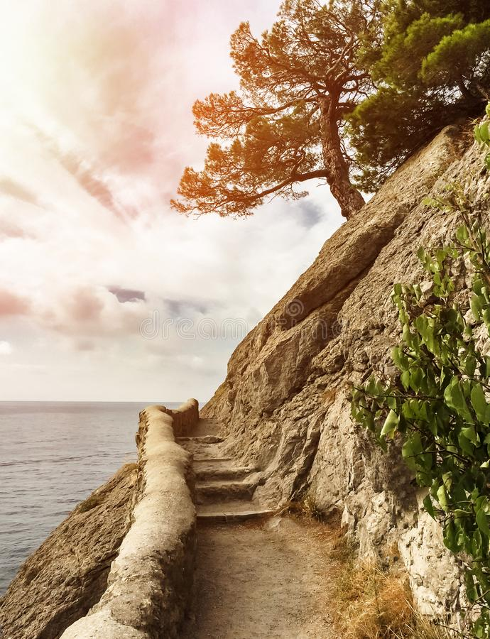 Lonely pine tree on the edge of steep cliff with ancient stone steps against the sea with a sunset, black sea, golitsyn trail in stock photography