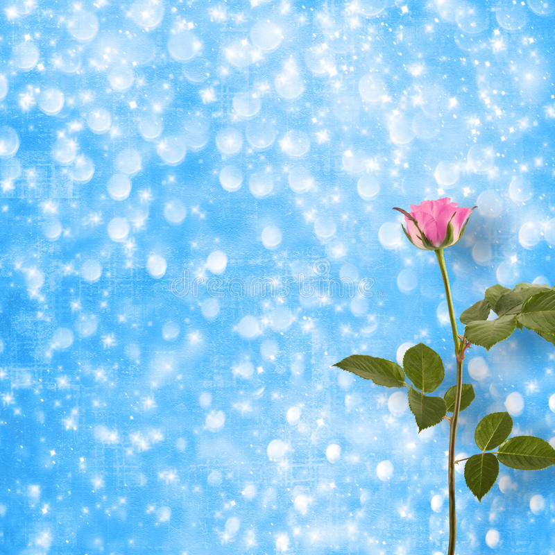 Lonely pink rose with green leaves stock images