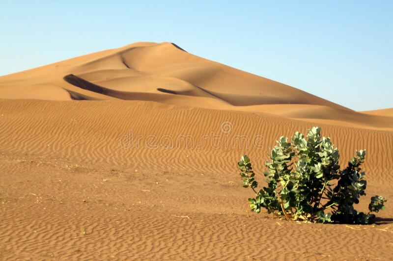 Lonely plant in the desert stock image