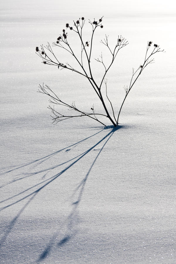 Lonely plant in the snow stock photo