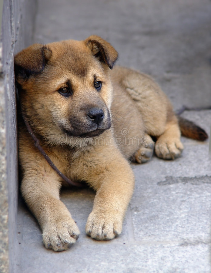 Lonely puppy royalty free stock images