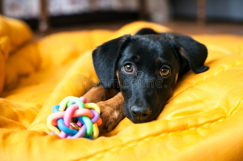 Lonely puppy dog royalty free stock photos