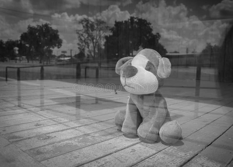 Reflection Outdoor Toy Plush Dog royalty free stock photo