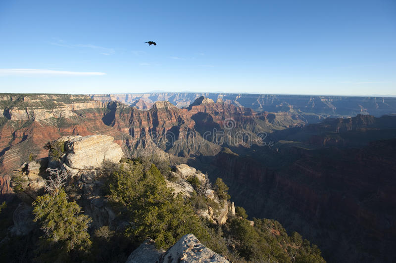 Download Lonely Raven Over Grand Canyon Stock Photo - Image: 17297982