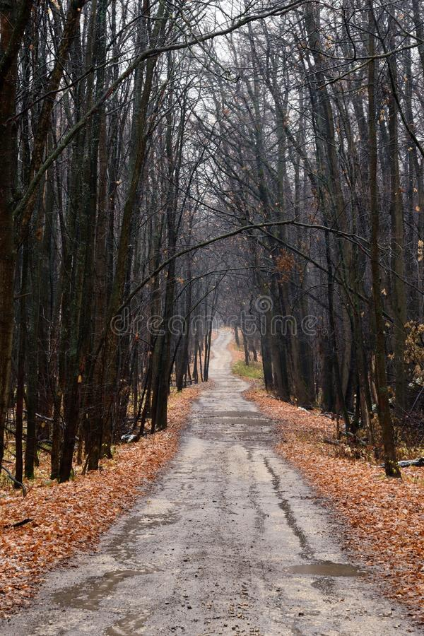 Free Lonely Road Through An Empty Autumn Forest At A Cloudy Day Royalty Free Stock Photography - 145664897