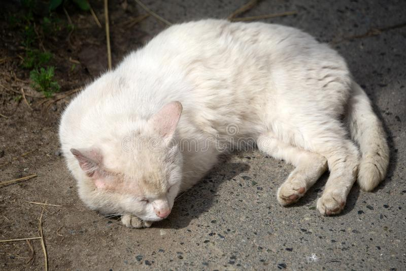 Lonely and sad abandoned old dirty white cat hiding under a vehicle shadow, abstracted looking away with pale blue eyes. Homeless. Street animal stock photography