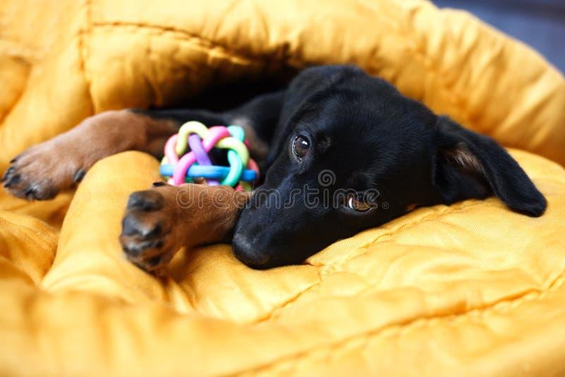 Lonely sad black dog stock images