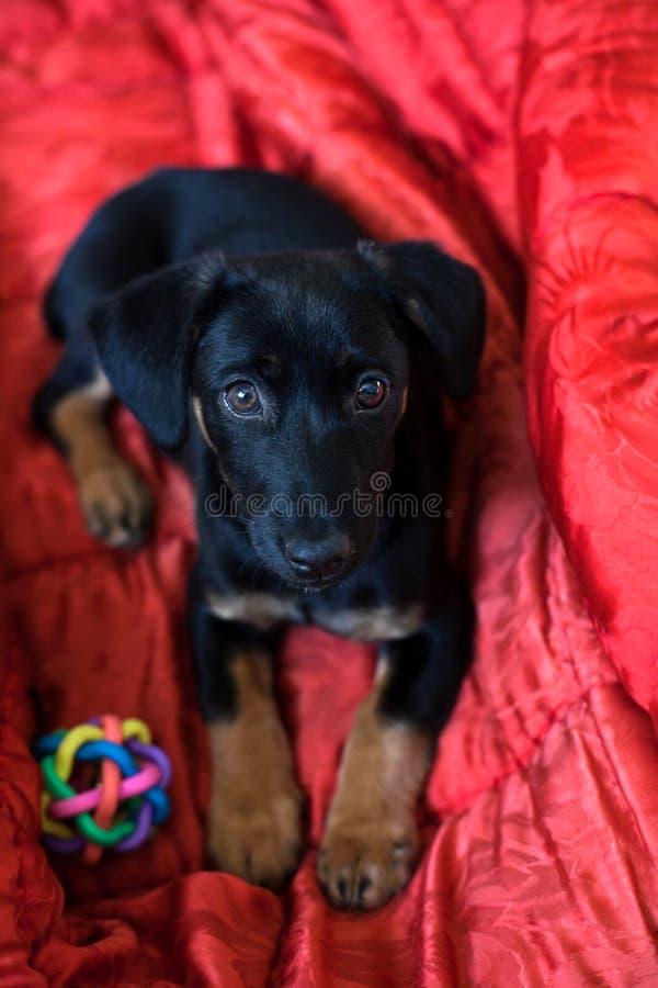 Lonely sad black dog royalty free stock images