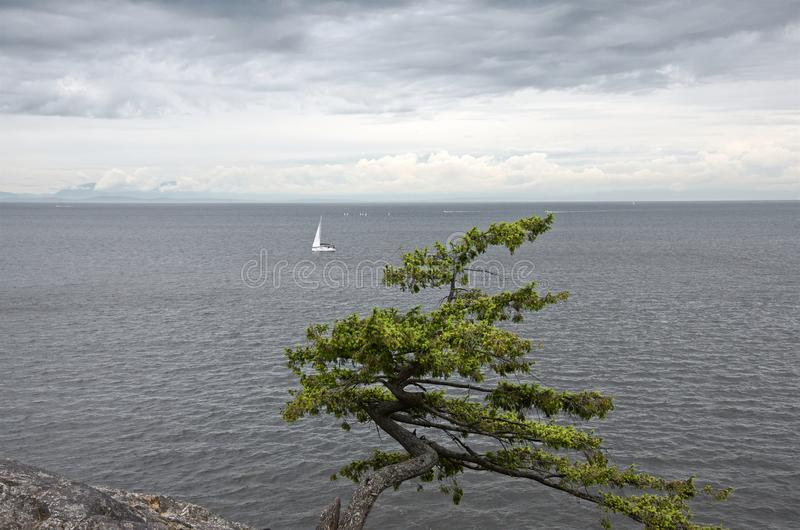 Lonely sailboat is in the ocean in cloudy weather. Lonely white sailboat is in the gray ocean in cloudy weather royalty free stock images