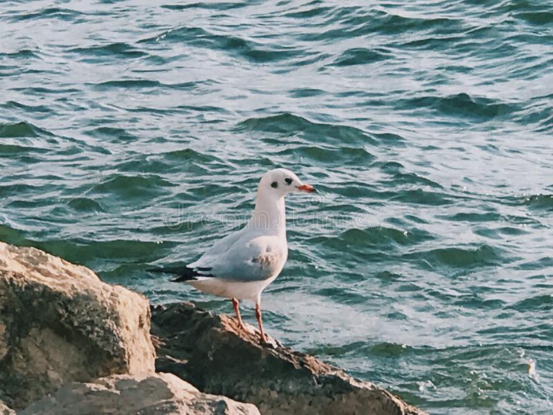 A lonely seagull. In Dali stock images