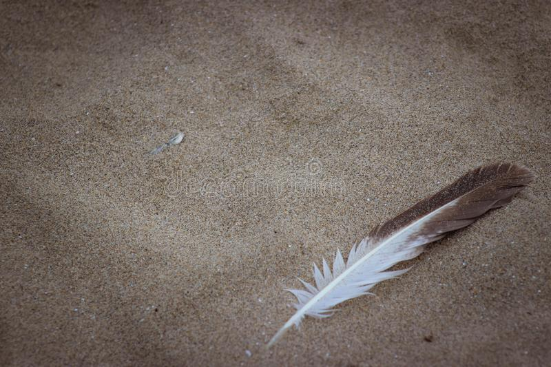 Lonely feather on the beach sand. A lonely seagull feather left behind on the warm beach sand stock photo