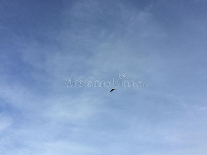 Seagull traversing the blue sky. Lonely seagull flying in the sky stock photography