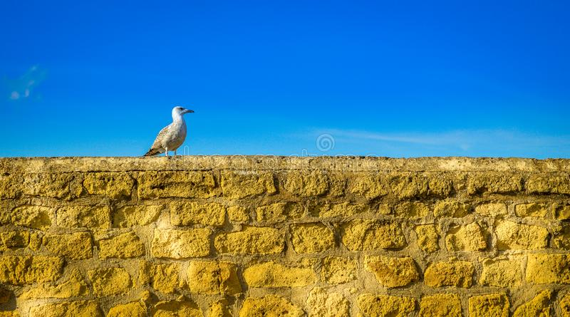 A lonely seagull on a wall stock images