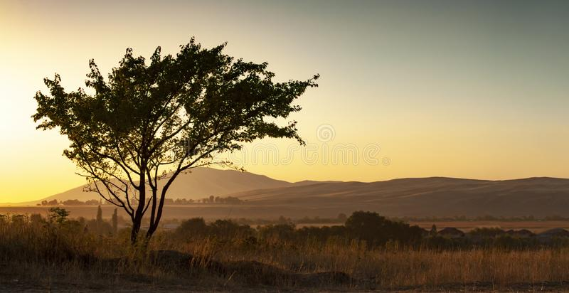 Lonely silhouette tree in sunlight on the background Mountain in the fog. Summer heat sunset.  royalty free stock image